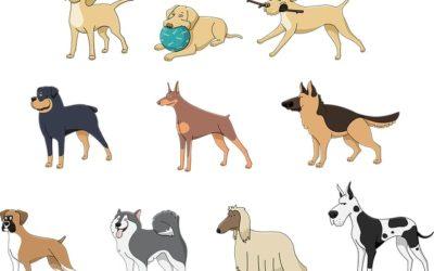 Cane: Tutto quello che devi sapere