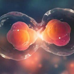 Come proliferano i tumori: individuato rapporto tra proteina Ambra1 e Ciclina D